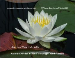 jyenior-michigan-wild-flowers