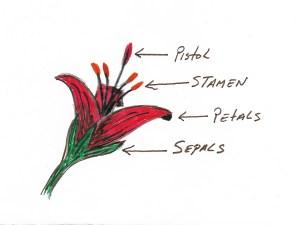 flowerlabels