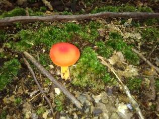 mushroom 14